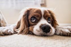 Mielas šuniukas